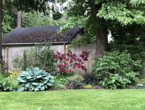 Shaded Sunny Border, How to Garden in a Shaded Sunny Border, Karen Hugg, https://karenhugg.com/2019/06/07/shaded-sunny-border/ #gardening #plants #shade #sun #border #garden #soil #clay