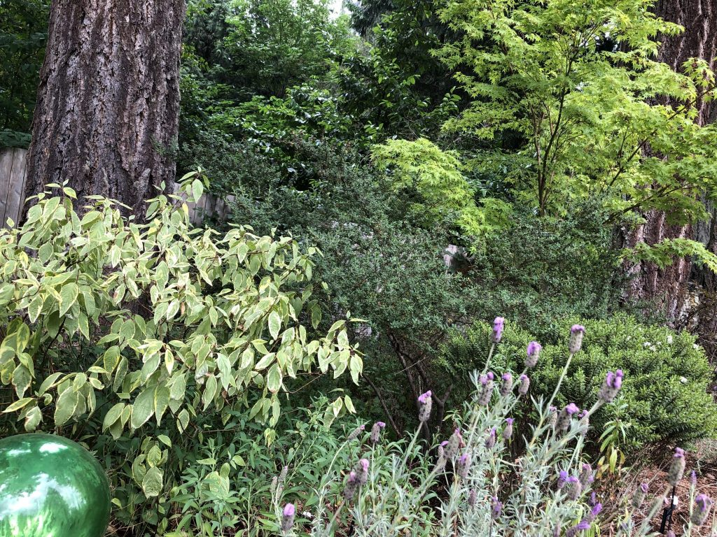 Woodland Border, In a Woodland Border, Plants Struggle in the Sun and Sandy Soil, Karen Hugg, https://karenhugg.com/2019/06/15/dry-woodland-border/ #woodlandborder #dry #gardening #plants #garden #fullsun #trees