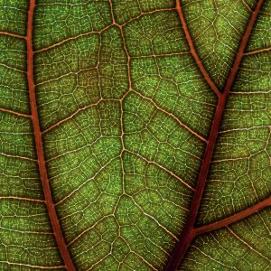 Leaf Pattern, Frazzled? Look at These 3 Relaxing Plant Images, Daily Stress ReLeaf, Karen Hugg, https://karenhugg.com/2021/02/16/relaxing-plant-images/, #dailystressreleaf #leafpattern #fractalpattern #green #plants #relaxation #destressing