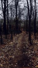 Forest Path, Karen Huss