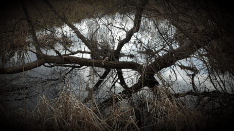 Wetlands, Karen Huss