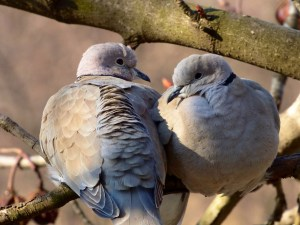 Be shrewd as serpents and innocent s doves by Karen Jurgens