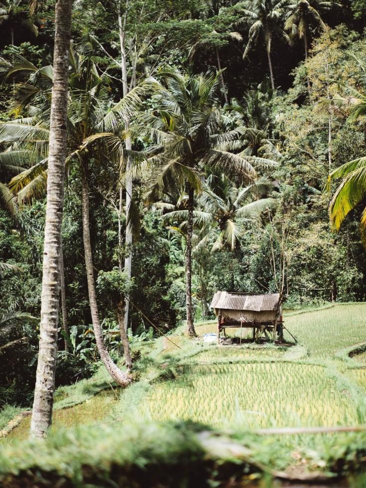 indonesia-bali-2