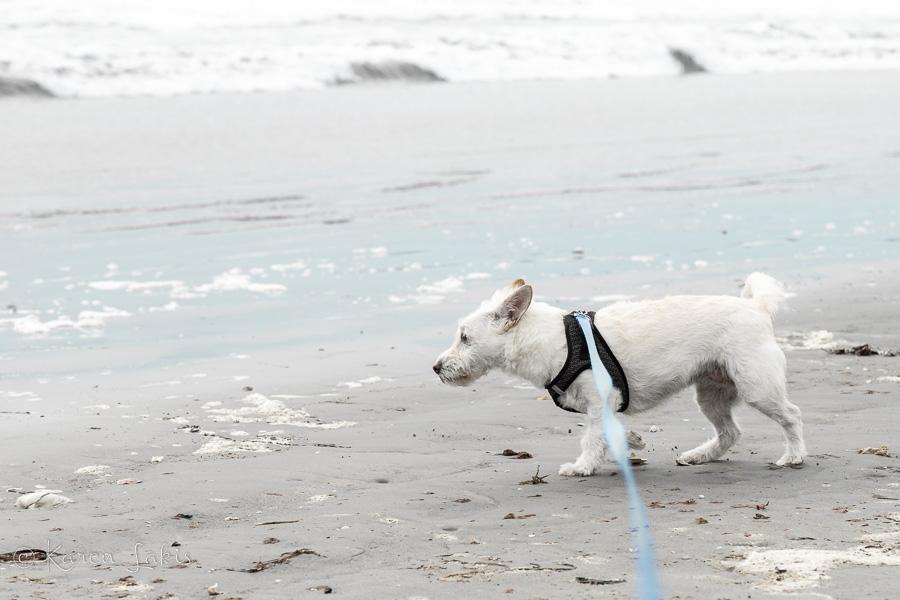 Georgie on the beach