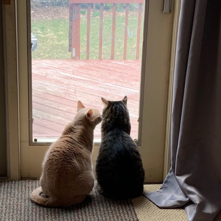 two cats by a door