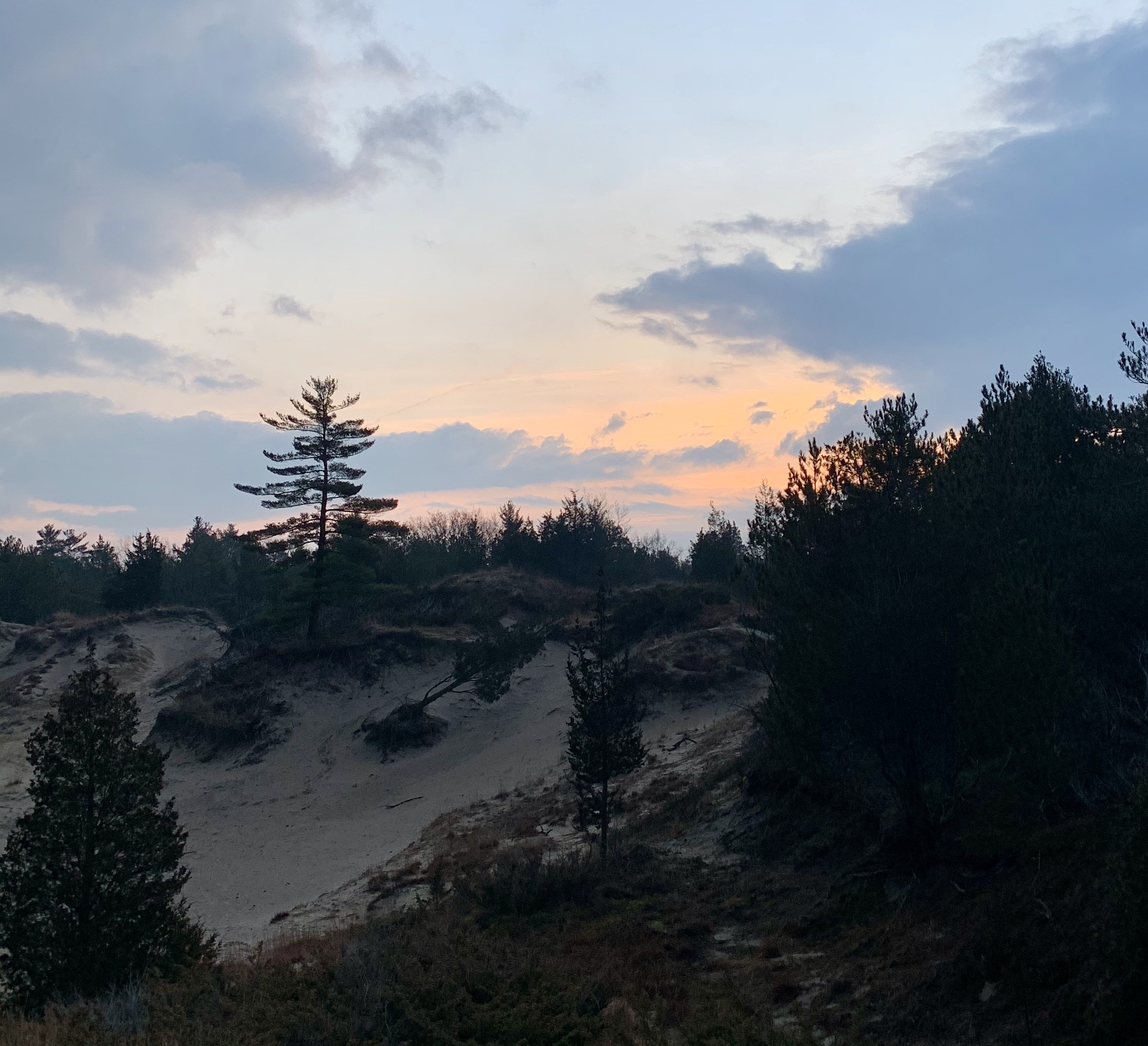 sand dunes, trees, and sunrise
