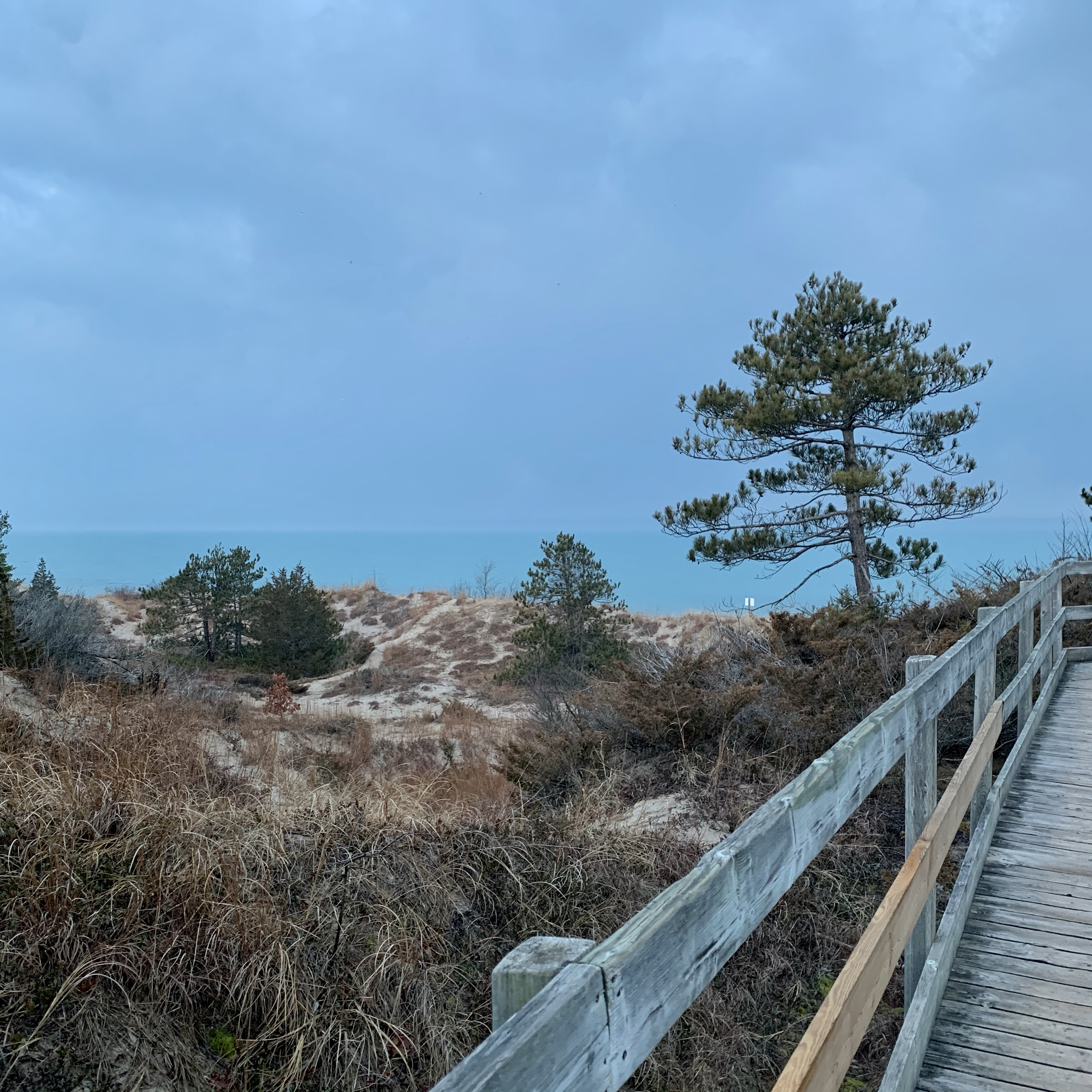 boardwalk, sand, trees, and water in the distance