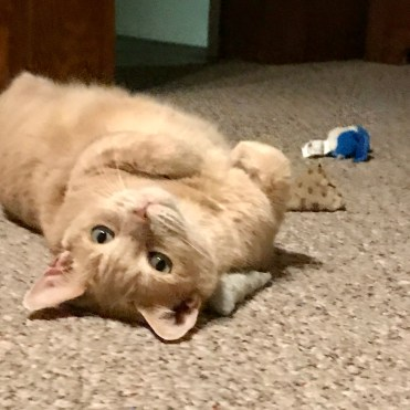 adorable cat on floor with toys