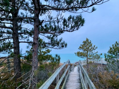 boardwalk, trees, dunes, and water in the distance