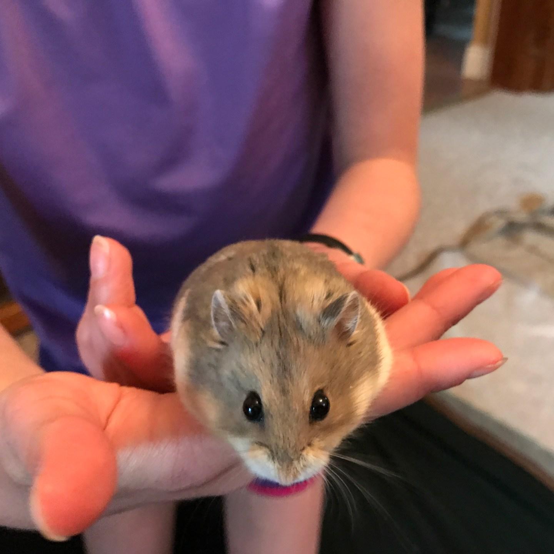 hamster being held
