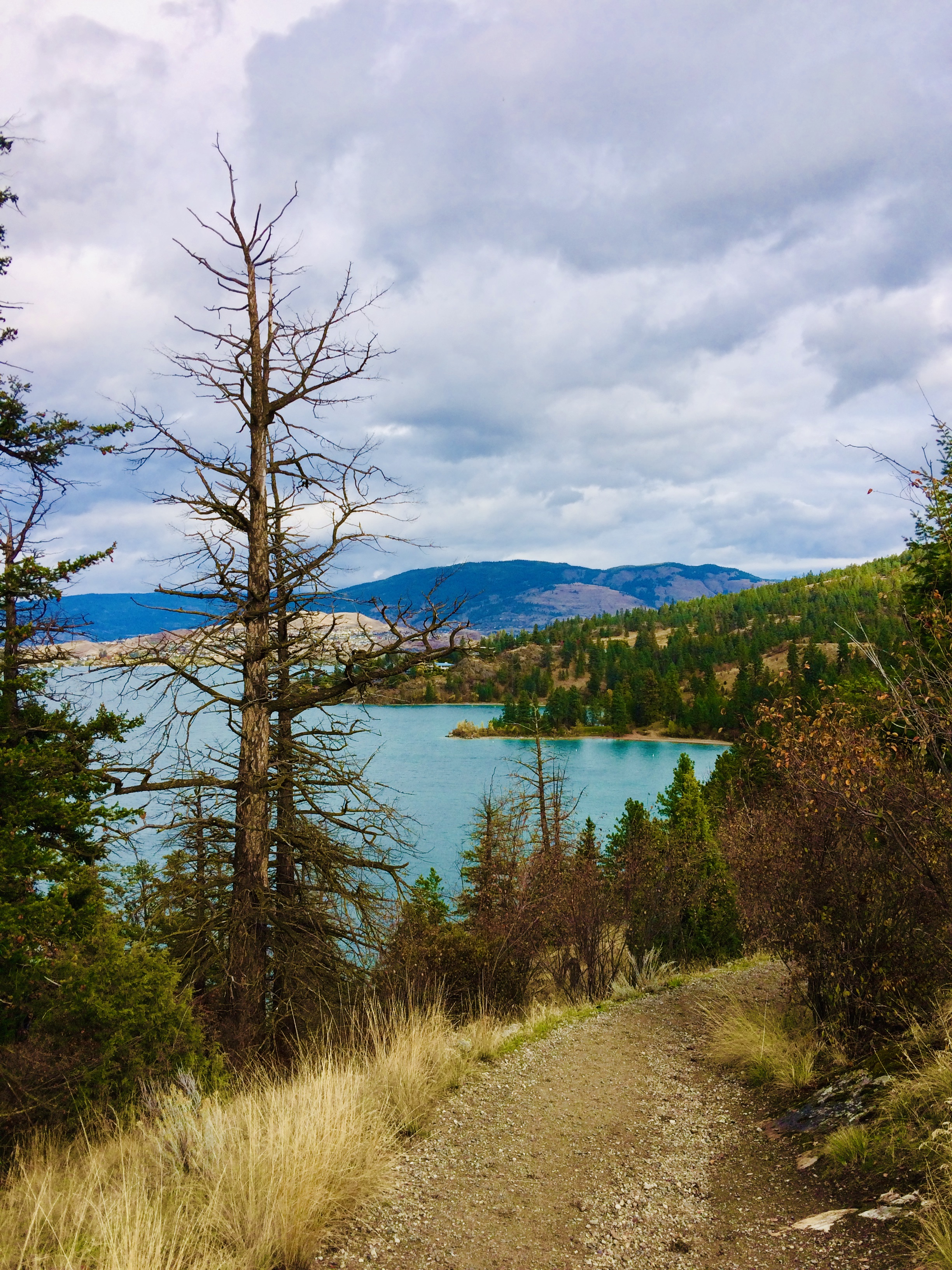 a turquoise lake with trees and hills