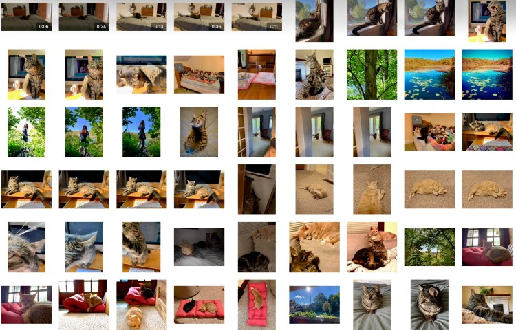screenshot of many pictures in my camera roll, mostly cats
