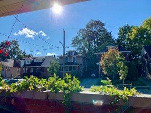 a view of a residential street on a sunny day with vines and trees and blue sky