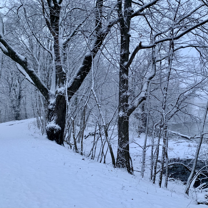 winter scene of snow on trees with a path