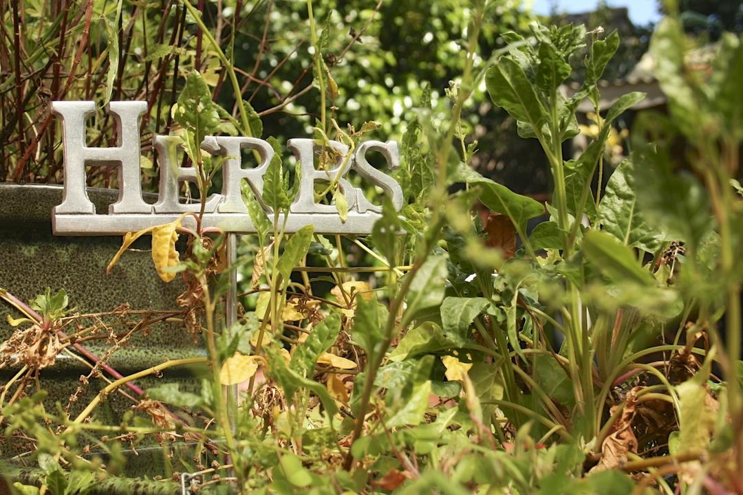 Herbs overgrown