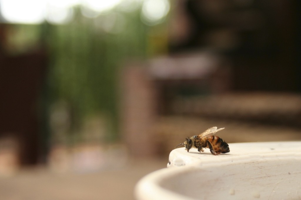 Lonely bee