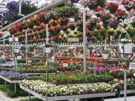 greenhouse flowers4
