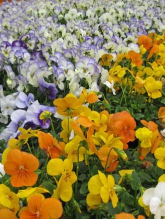greenhouse flowers7