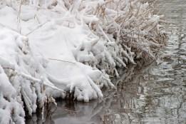Snowy grasses ©2014 Karen A Johnson