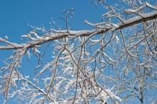 Snowy branch ©2014 Karen A Johnson