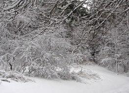 Snowy bushes ©2014 Karen A Johnson