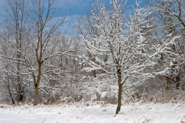 Snowy woods ©2014 Karen A Johnson