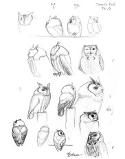 Screech Owls sketch page © 2014 Karen A Johnson