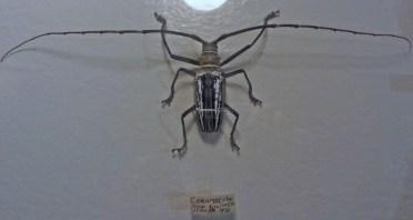Long horned beetle © 2014 Karen A. Johnson