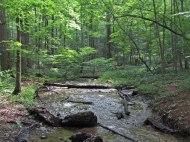 Crossing the stream © 2014 Karen A. Johnson