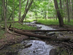 Peaceful stream © 2014 Karen A. Johnson