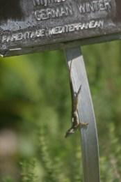 Lizard 1 © 2014 Karen A. Johnson
