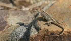 Lizard 2 © 2014 Karen A. Johnson