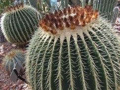Cactus © 2014 Karen A. Johnson