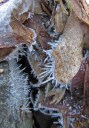 Hoarfrost on leaves © 2014 Karen A. Johnson