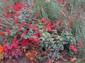 Red flowers © 2014 Karen A. Johnson