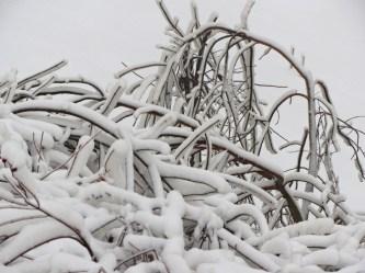 Snowy branches © 2015 Karen A. Johnson
