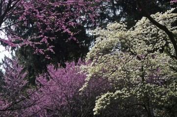Back-lit branches © 2015 Karen A. Johnson