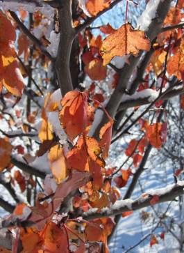 Remnant of fall © 2015 Karen A. Johnson