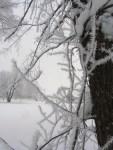 Christmas frost 6 © 2015 Karen A. Johnson