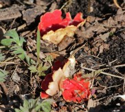 Red fungus © 2016 Karen A. Johnson