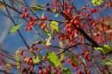 Berries 2 © 2016 Karen A. Johnson