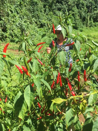 Picking hot peppers