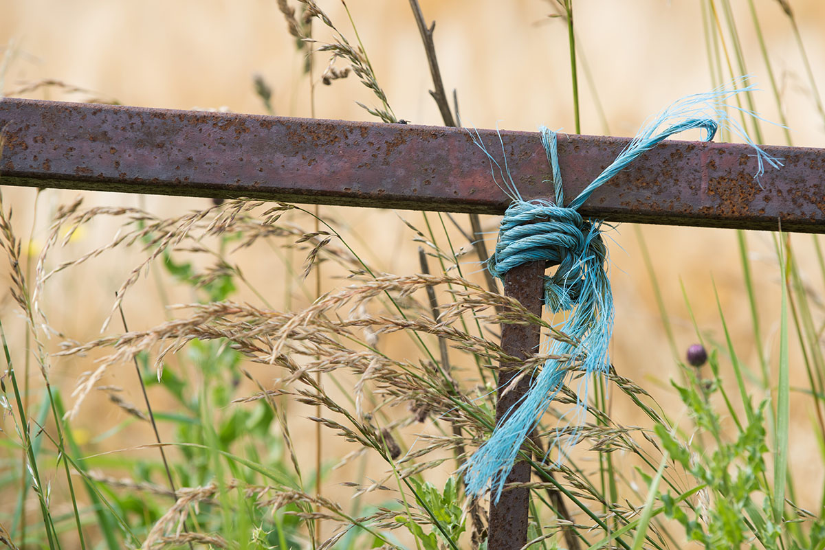 Blue twine wrapped around a rusty metal gate with long grass and golden barley growing behind it