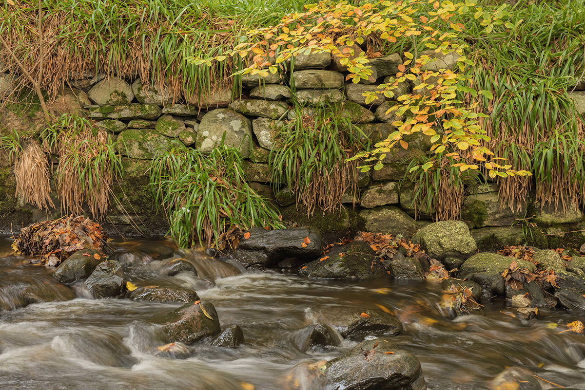 Stream flowing over rocks, some with leaves on them, in front of a grey stone wall with vegetation growing over it