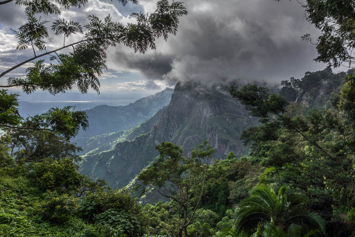 Rain Forest, Western Usambara Mountains,  near Lushoto, Tanzania