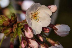 Blossom Bloom