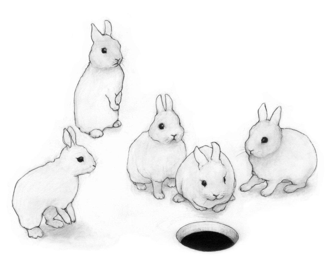 Rabbits drawn by Karina Kalvaitis
