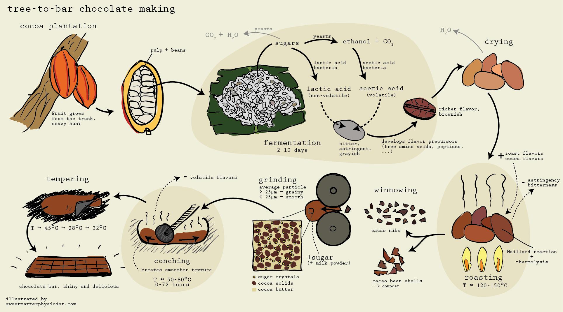 Chocolate Manufacture Porcess