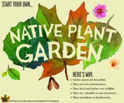18. Megan Lynch: Native Plant Garden Promotional Poster
