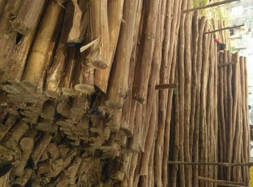 Daftar Harga Kayu Dolken Gelam – Jabodetabek dan Jawa Barat